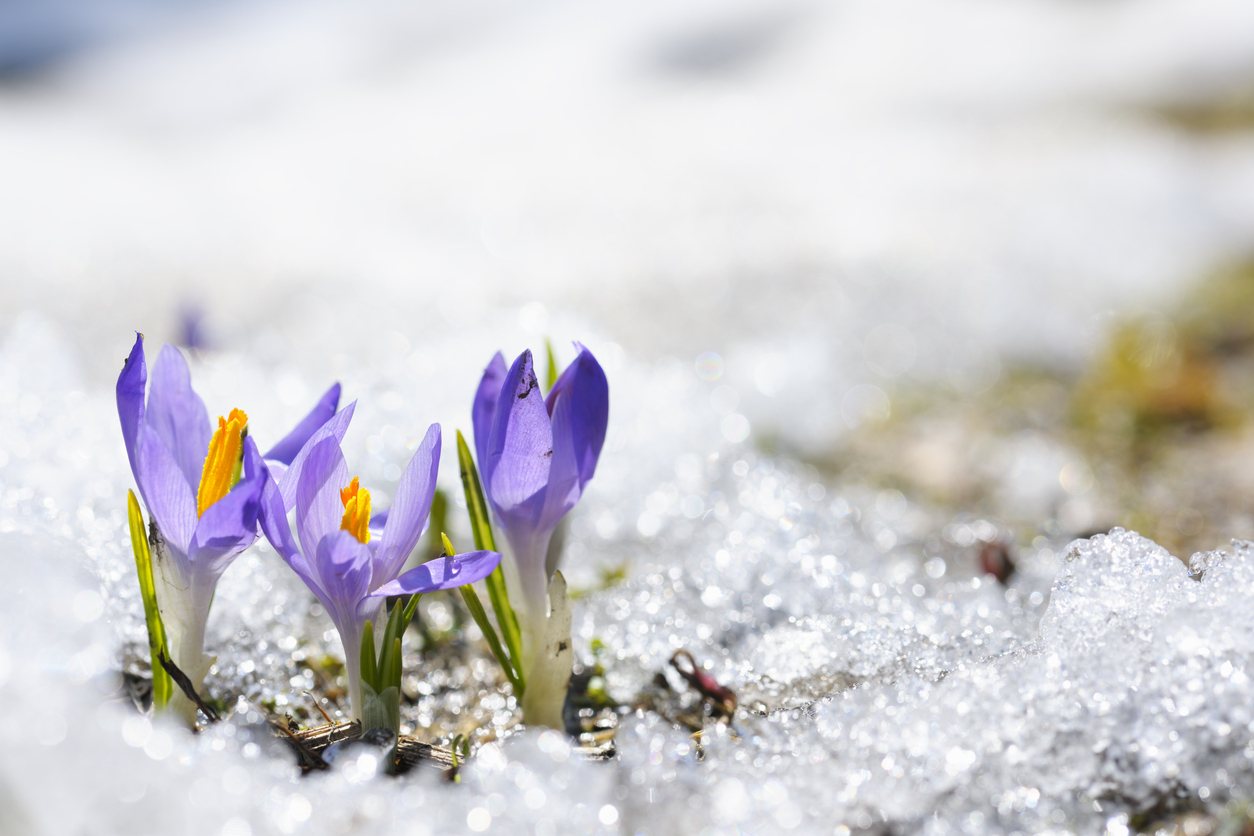 early-spring-flowers